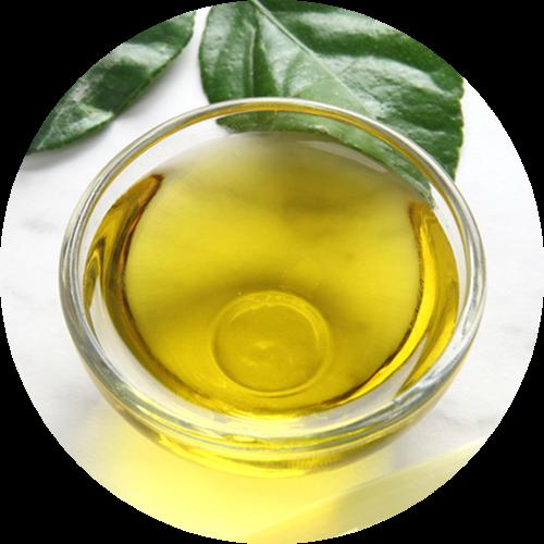 Ingredients-PNG_0020_moringa-2
